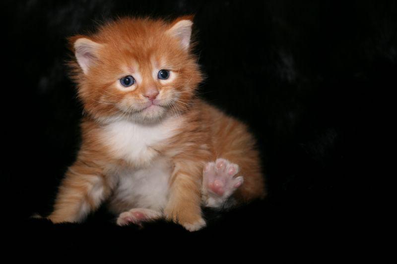 Кошка играть